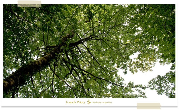Fennel's blog - The company of trees