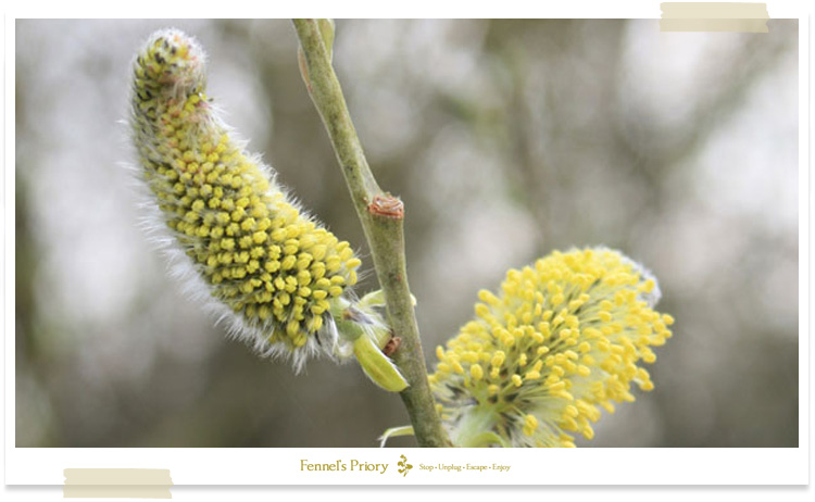 Fennel's blog - Signs of spring from within