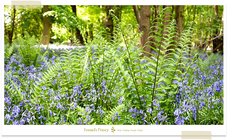 Fennel's blog - spring into summer
