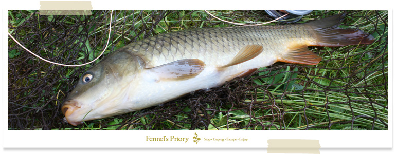 Wild carp on the Fly, Fennel's Priory event