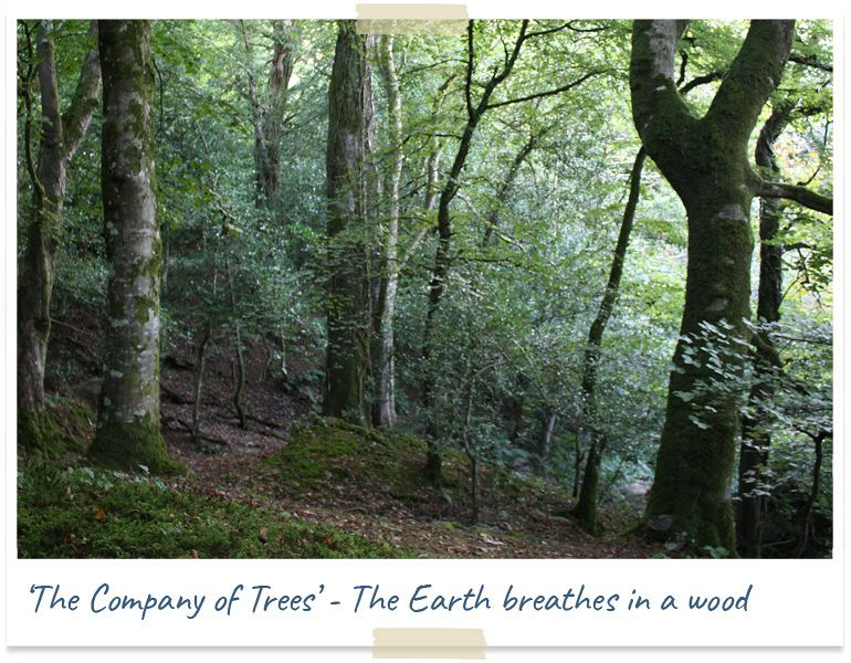 The company of trees - the earth breathes in a wood