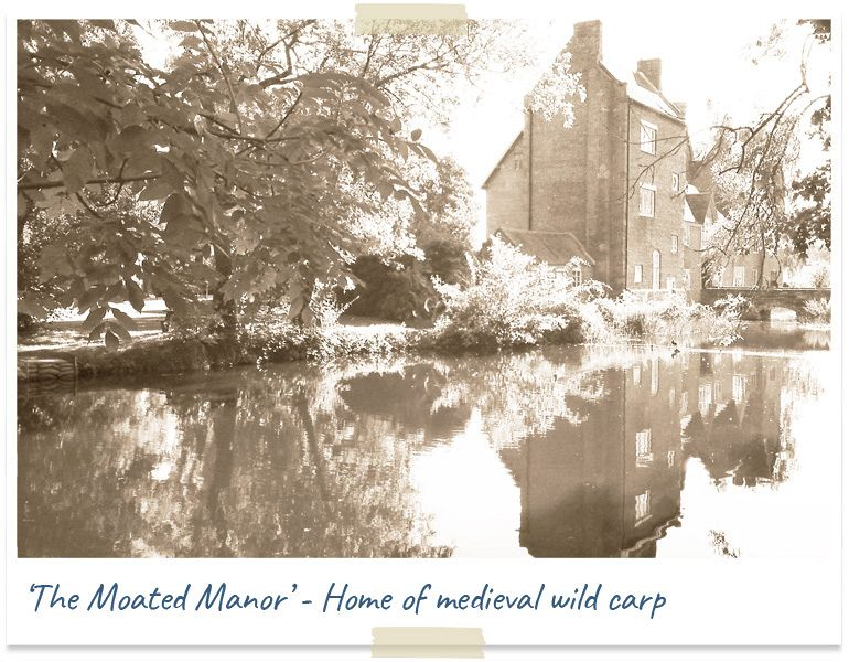 The moated manor - home of medieval wild carp