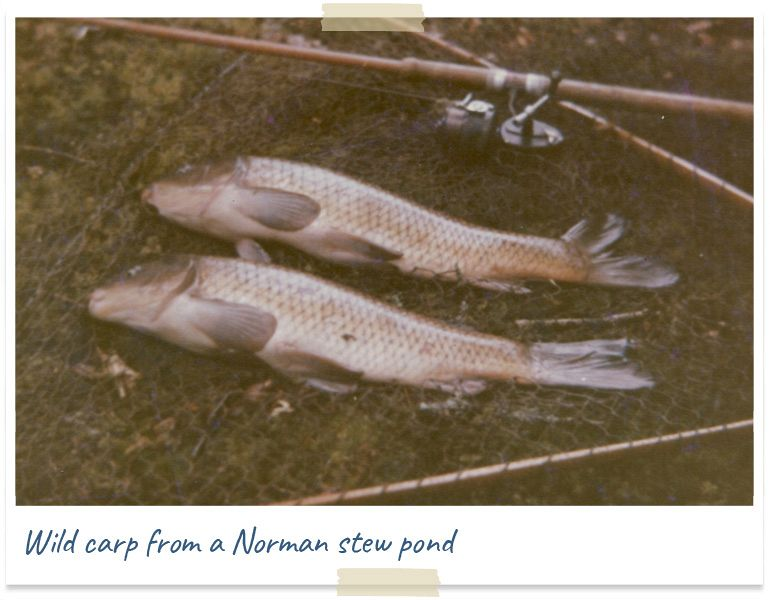 wild carp from a norman stew pond